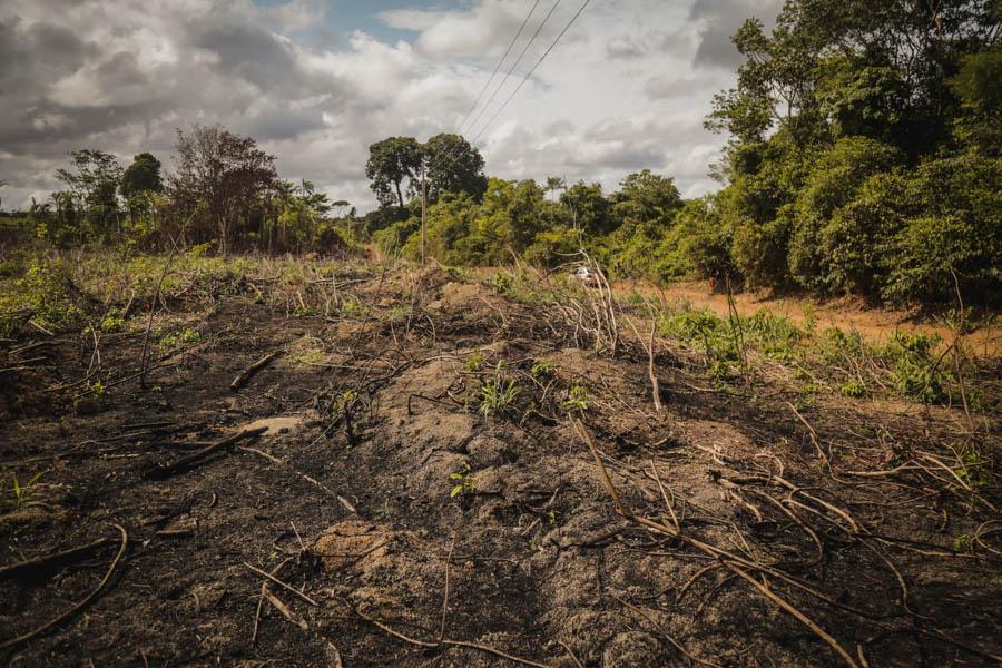 """Área queimada para a expansão do cultivo de soja: prática do """"puxadinho"""" é muito usada na região amazônica, e consiste em aumentar o tamanho da terra aos poucos, queimando a floresta metro a metro, ano a ano, e avançando sempre à margem de qualquer tipo de controle. Foto: Carol Ferraz / Amigos da Terra Brasil"""
