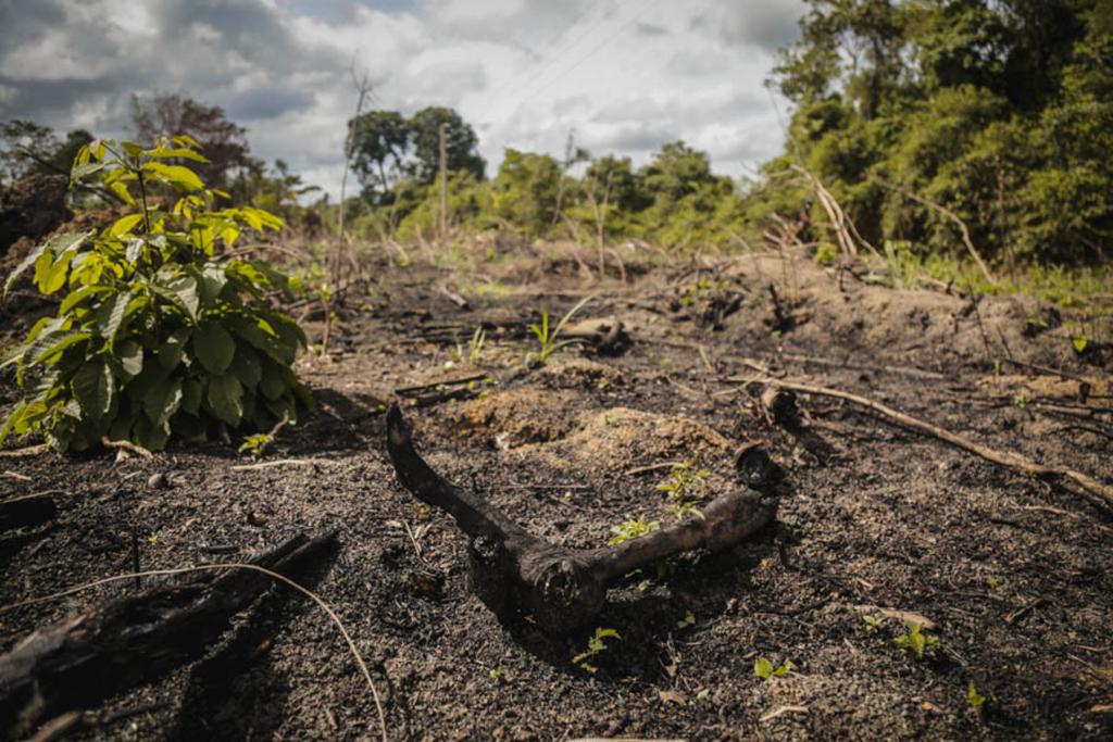 Com o avanço dos monocultivos na Amazônia, a floresta vira cinzas. Foto: Carol Ferraz / Amigos da Terra Brasil